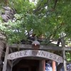 Watch Alice Waters Discuss What Changed at Chez Panisse After the Fire