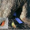 Teeny Tiny Tree House Back by Popular Demand