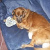 Dog Day Afternoon: Battle Over $500K Bequest For Hearing Dog Program Continues Today