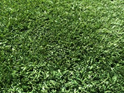 SoMa West's artificial turf, like the part of a golf hole between the fairway and the green, should make dog owners happy. - PETE KANE