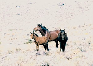 """""""Wild, wild horses, we'll ride them some day"""" - FLICKR/HEP73"""