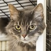 Peninsula SPCA Is Giving Away Kittens, Go Get One Now