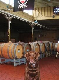 Winery tour may include dog. - TREASURE ISLAND WINES