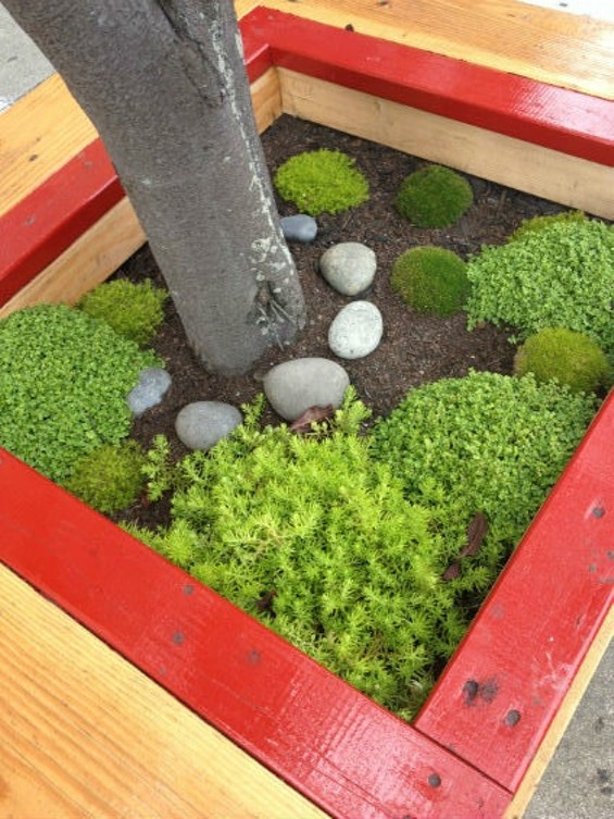 Would you pee on this tree bench mini-garden? Do you kiss you mother with that pee?