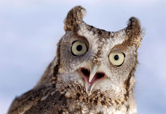 You like Owl City too? No way! - COURTESY OWL-PICTURES.COM