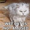 Baylinks: Rain, Ken Garcia, & Pobrecito