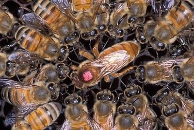 emma's bee