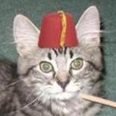 Cat in fez