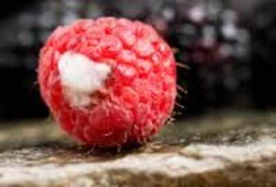 moldee raspberry