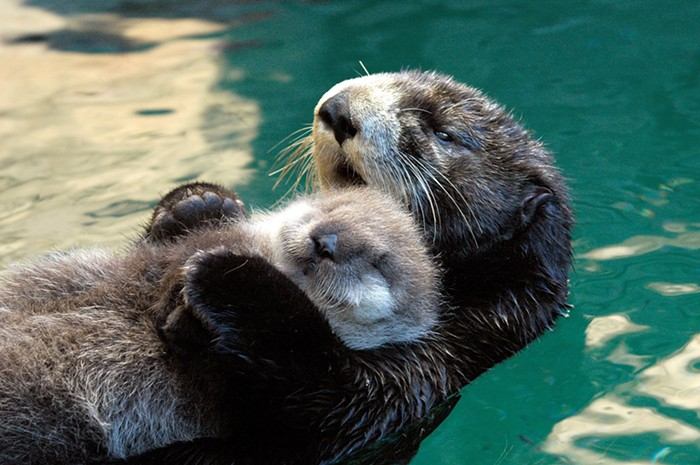 Looking for a daytime date with your valentine, your benevolent roommate, or yourself? The Seattle Aquarium is open daily for timed, reserved visits.