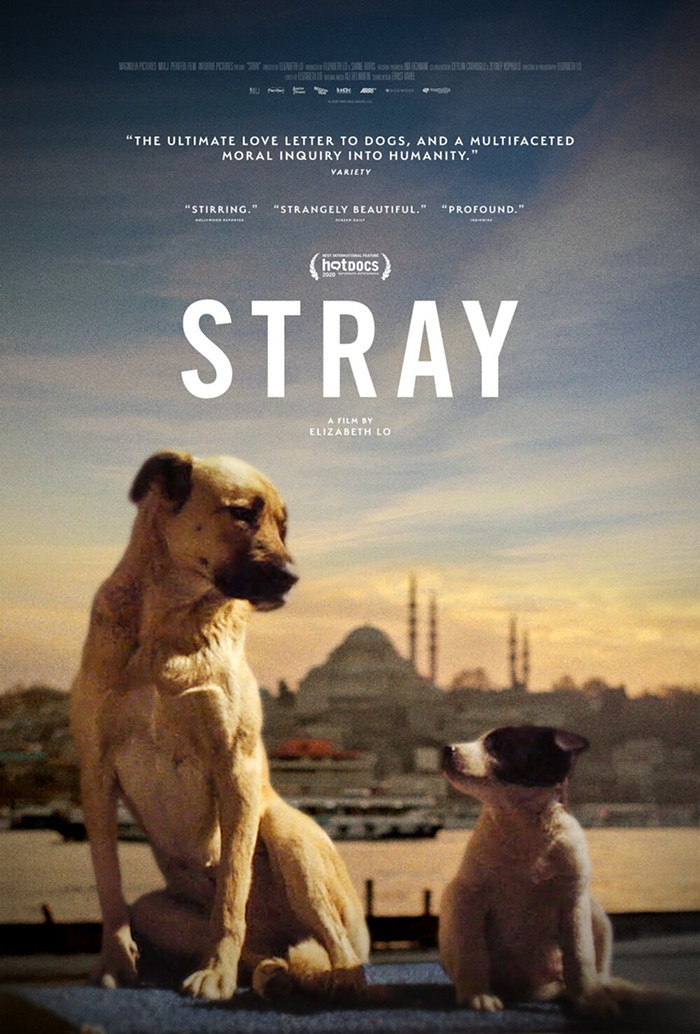 Theatrical_poster_for_STRAY__a_Magnolia_Pictures_release._Ph.jpg