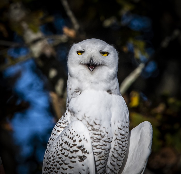 Yuki the snowy owl COULD BE NEXT and youre just sitting there? Doing nothing?