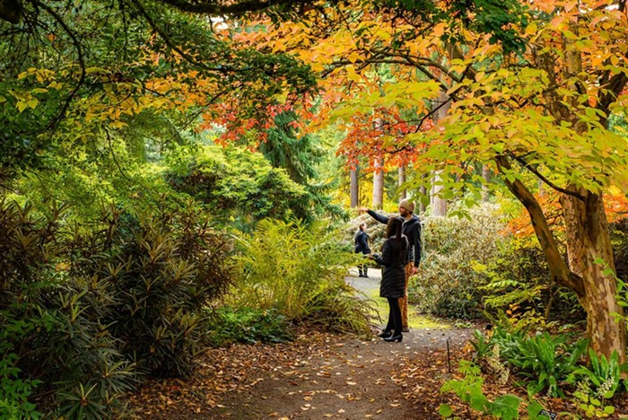 Take a leisurely weekend drive down to Federal Way to see the trees poppin off at the Rhododendron Species Botanical Gardens Fall Foliage Festival.