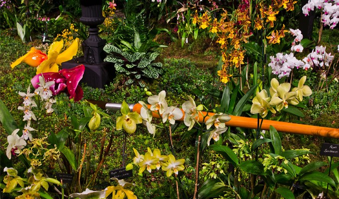 in order to win the gold medal at this thing your garden must not only have living attractive plants in it but also be perfectly lit and festooned with - Northwest Flower And Garden Show