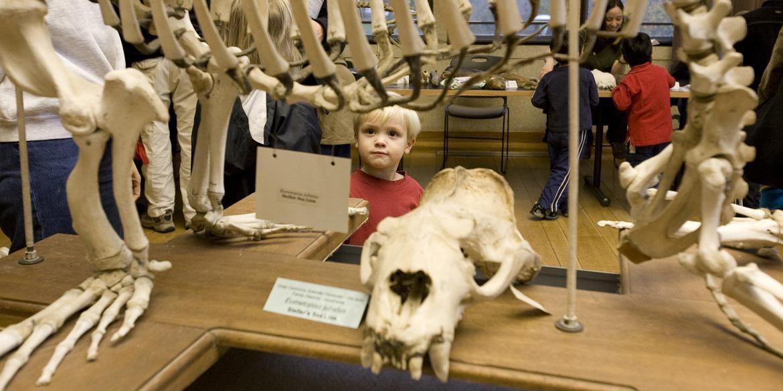 burke museum meet the mammals of china