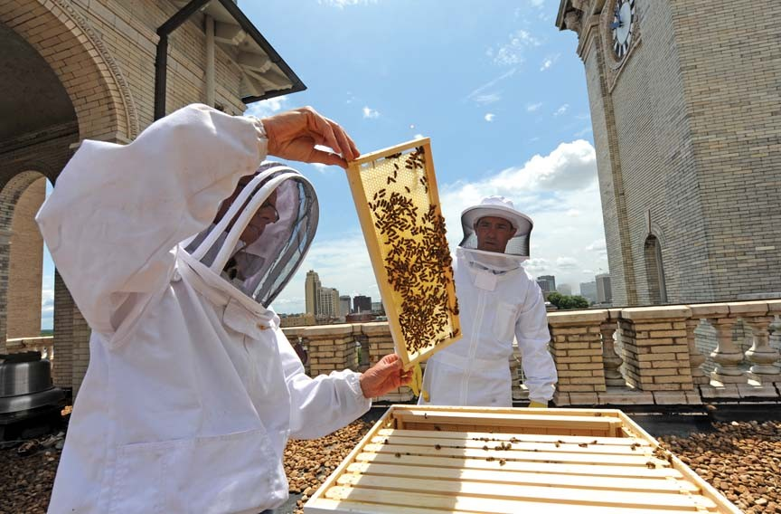 Beekeeper David Stover lifts a frame from the hive on the Jefferson Hotel roof while Lemaire's executive chef, Walter Bundy, watches. - SCOTT ELMQUIST