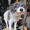 Best Shop Dog