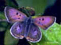 bog_copper1_jpg-magnum.jpg