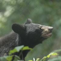 animal_bear_200.jpg