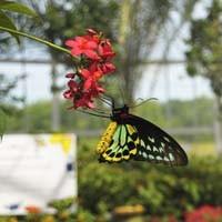 news22_butterflies_200.jpg