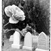 Gardening: Grave Robbing