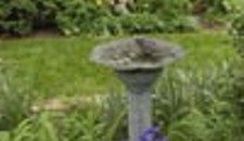Home Front: Ginter Gardens