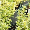 Home Front: Herbs Galore