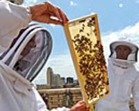 Honeybees Take Jefferson Hotel by Swarm
