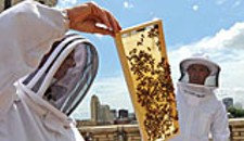 Honeybees Take Jefferson Hotel by Swarm