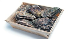 How to Throw an Oyster Roast
