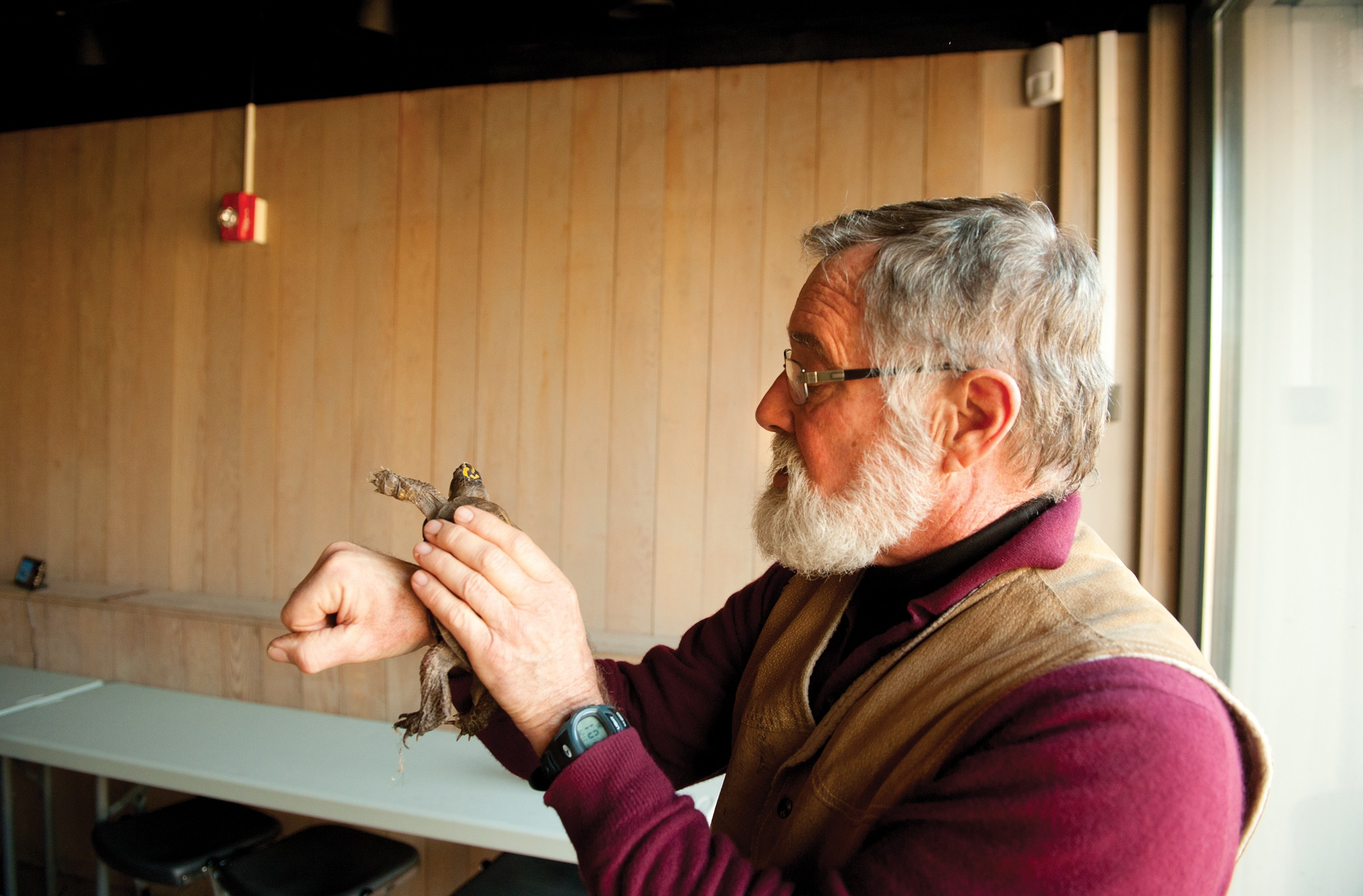 It's the little things, including the eastern box turtle, that have defined Ralph White's 32-year career managing the James River Park System. - SCOTT ELMQUIST