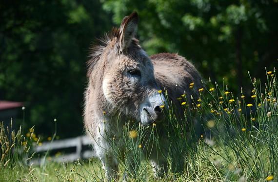 people_donkey_percy.jpg