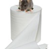 Rats in your toilet.