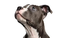 Ring Dog Rescue Metal Benefit Show at Emilio's
