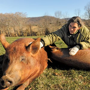 Some animals, including these pigs at Gryffon's Aerie in Crozet, are not intended for slaughter. Owner Ramona Huff contends that animals raised in humane conditions are happier and taste better than those that are factory farmed.