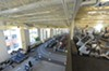 The cardio level of the ACAC fitness and wellness center comes to life on a recent afternoon.