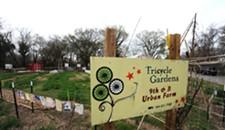 No Gardens, No Way? City Still Pushing Neighborly Nurseries