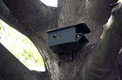 The state still provides about a dozen houses for squirrels in the trees of Capitol Square. The current squirrel shelters, built a decade ago, were based on a design from 1949, according to the Department of General Services. - NED OLIVER