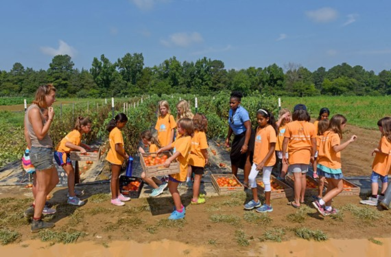 Elementary-age volunteers from Camp Blue Sky harvest tomatoes on Shalom Farms in Powhatan County. The agricultural nonprofit works to provide fresh produce to underserved Richmonders in some of the city's poorest neighborhoods. - SCOTT ELMQUIST