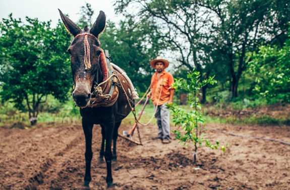 The first Health Warrior-funded farm inspired the company to create a Mexican chocolate bar for Operation Farm & Run, a Kickstarter to help the Tarahumara grow chia for the company. - HEALTH WARRIOR