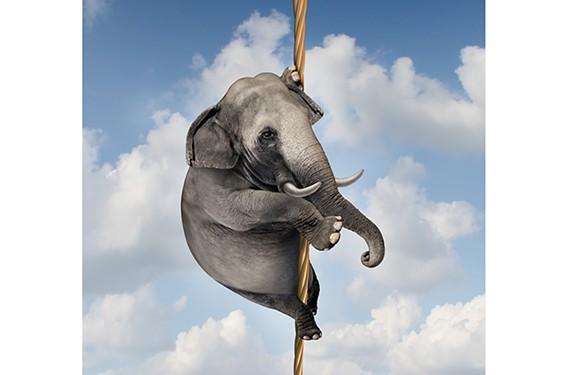 feat18_elephant.jpg