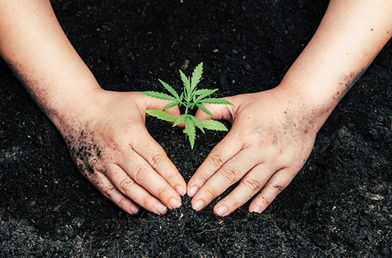 cover26_marijuana_no_headlines.jpg