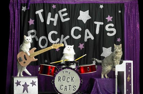 night23_rock_cats.jpg