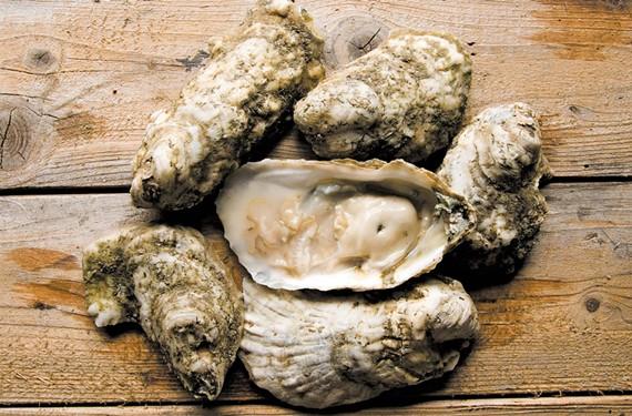 food34_short_oysters.jpg
