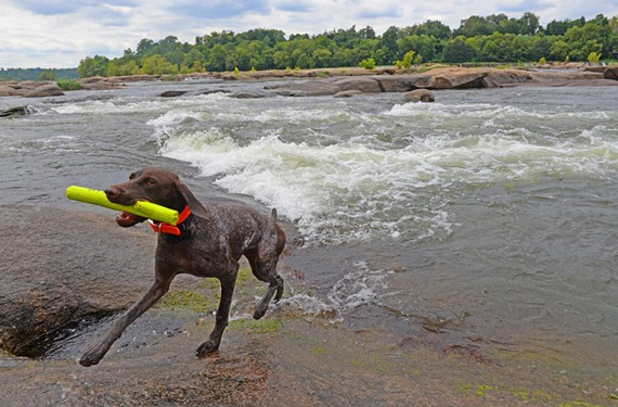The James River is more than a place to take your dog — although your dog would probably disagree with that.