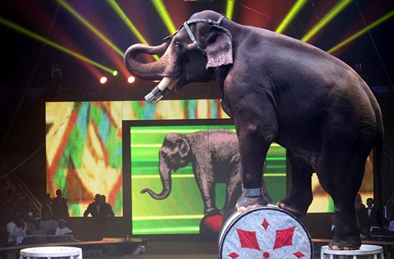 UniverSoul Circus, in town this week, says it opposes animal cruelty.
