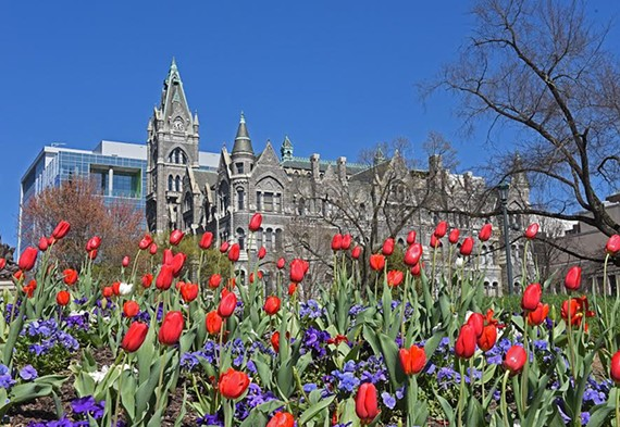 tulips_city_hall.jpg