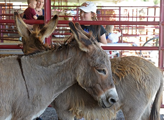 donkeys16.jpg