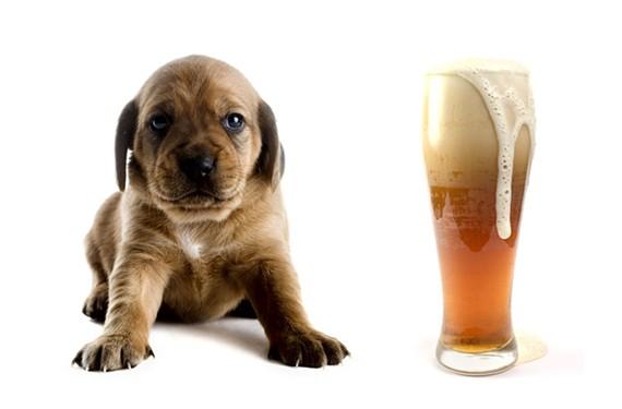 night14_beer_puppies.jpg