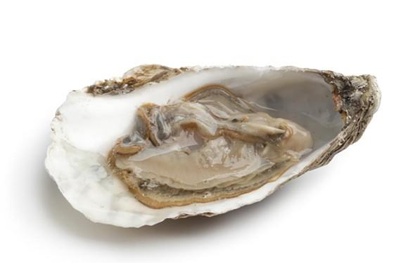 night24_oysters.jpg